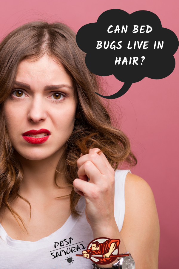 Can bed bugs get in your hair? This article answers