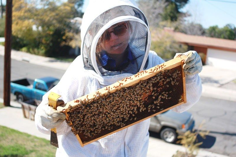 5 THINGS TO KNOW BEFORE GETTING BEES | Bee keeping ...