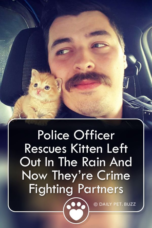 Police Officer Rescues Kitten Left Out In The Rain And Now Theyre Crime Fighting Partners When a police officer found a kitten under a dumpster he brought the little oran...