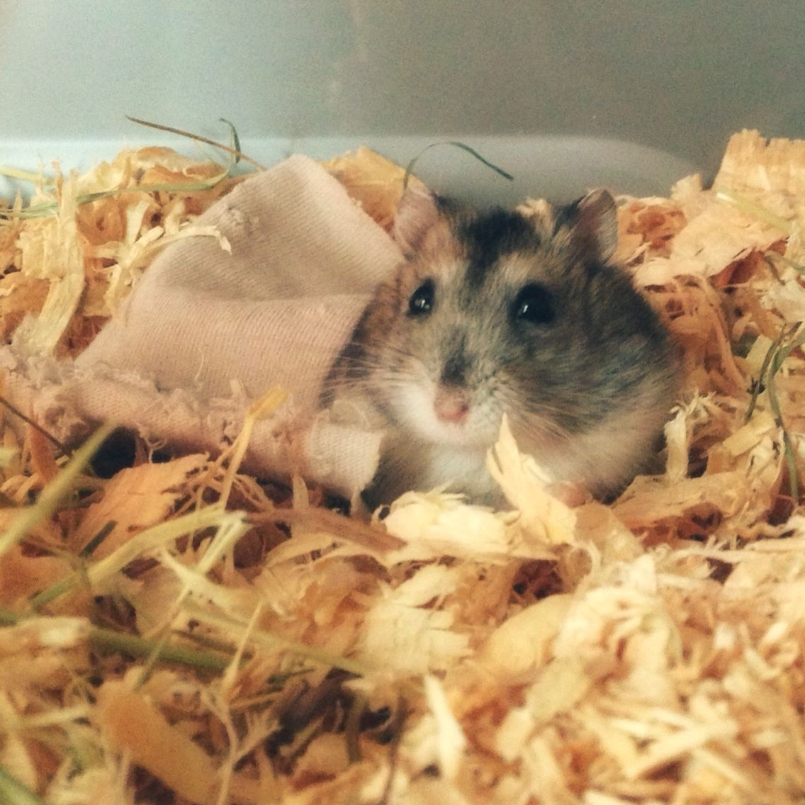 hamster eating inside of his food bowl - 20 cute pictures of