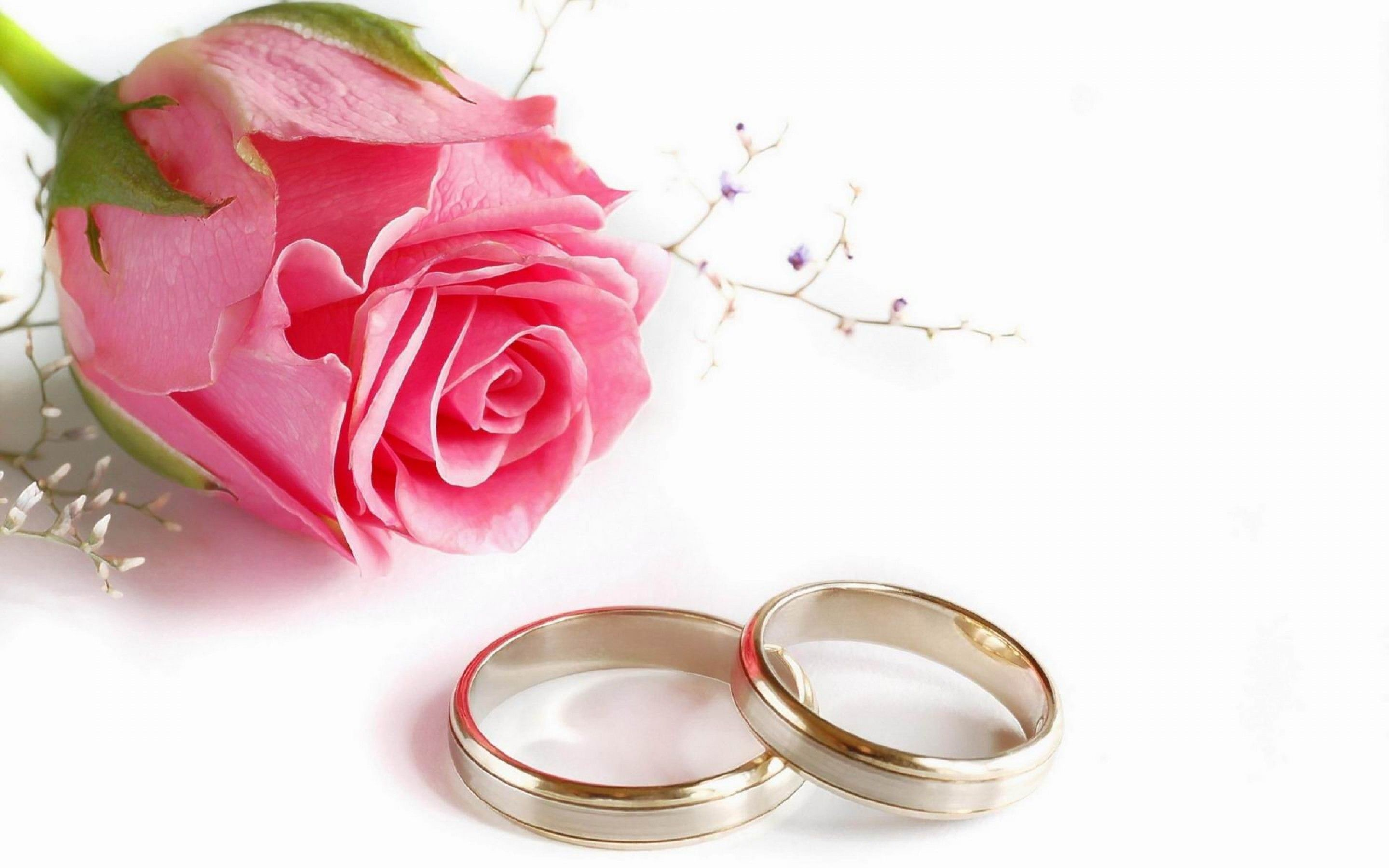 Romantic Pink Rose and Couple Wedding Rings HD Wallpaper | عذب ...