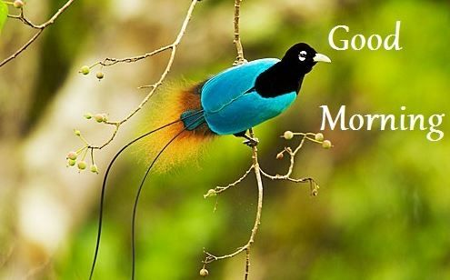 Good Morning Nature Hd Image Good Morning Images Birds Most