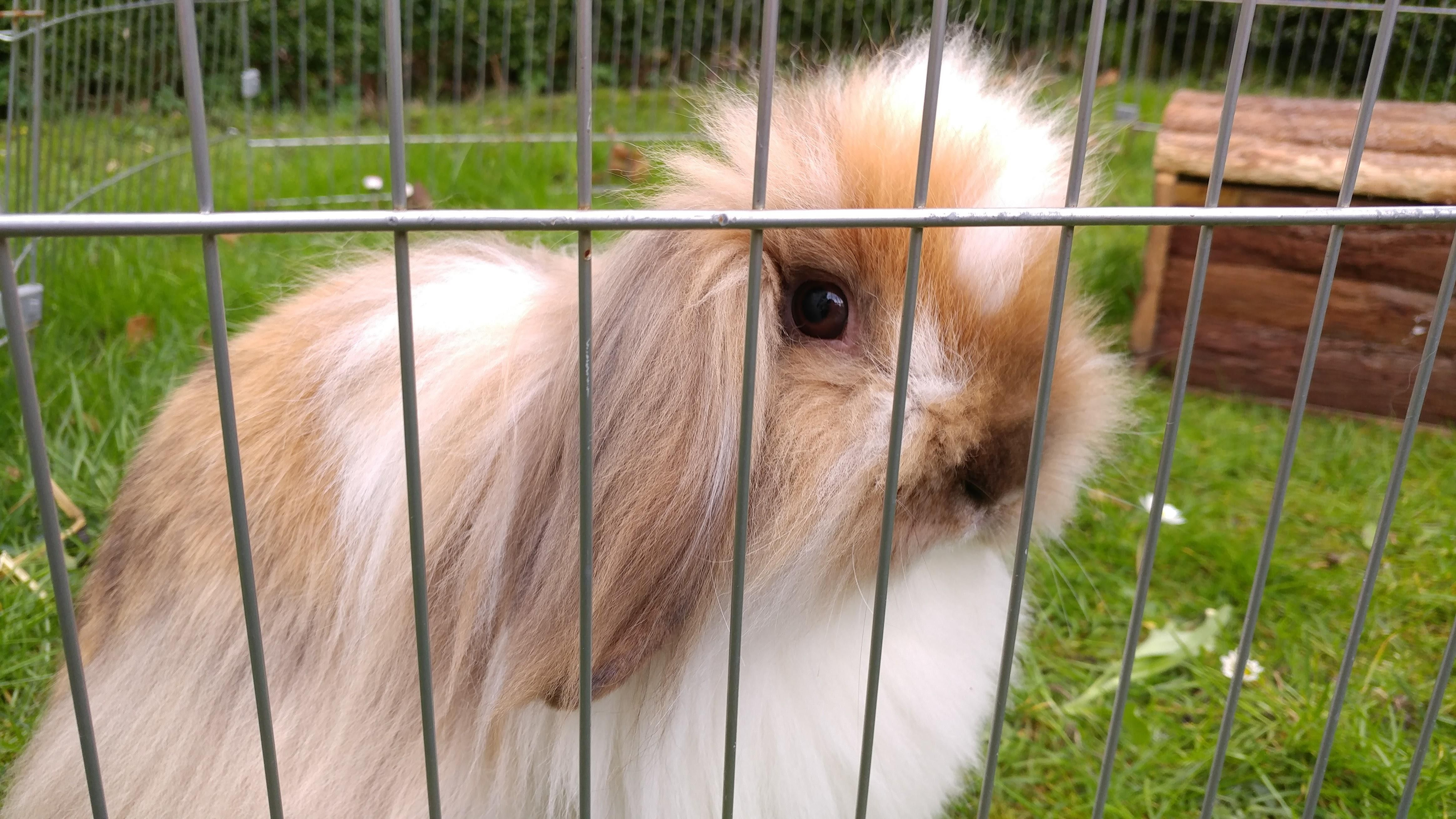 Are Rabbits Easy To Look After Low Maintenance Pets Rabbit Bunny Care