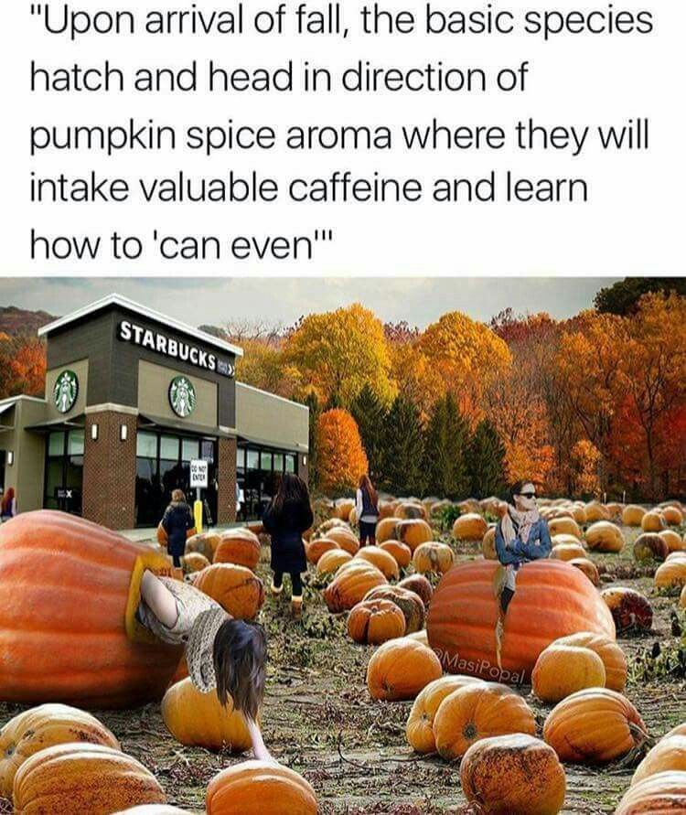 Small Face Pumpkin Meme