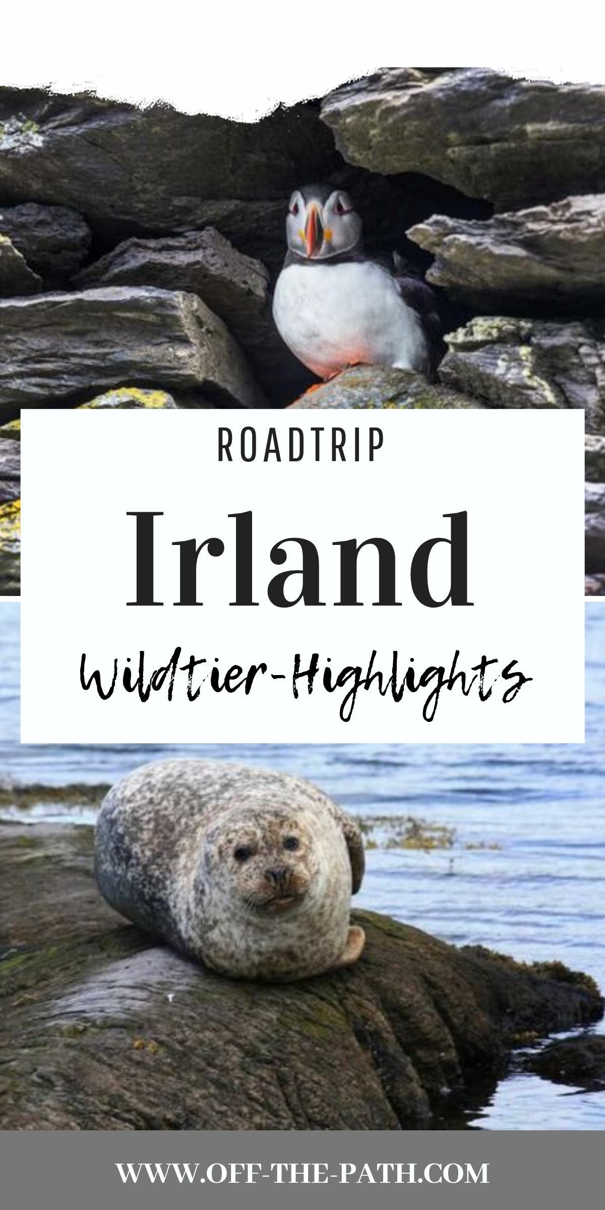 Wo In Irland Welche Wilde Tiere Auf Dich Warten Und Zu Welcher