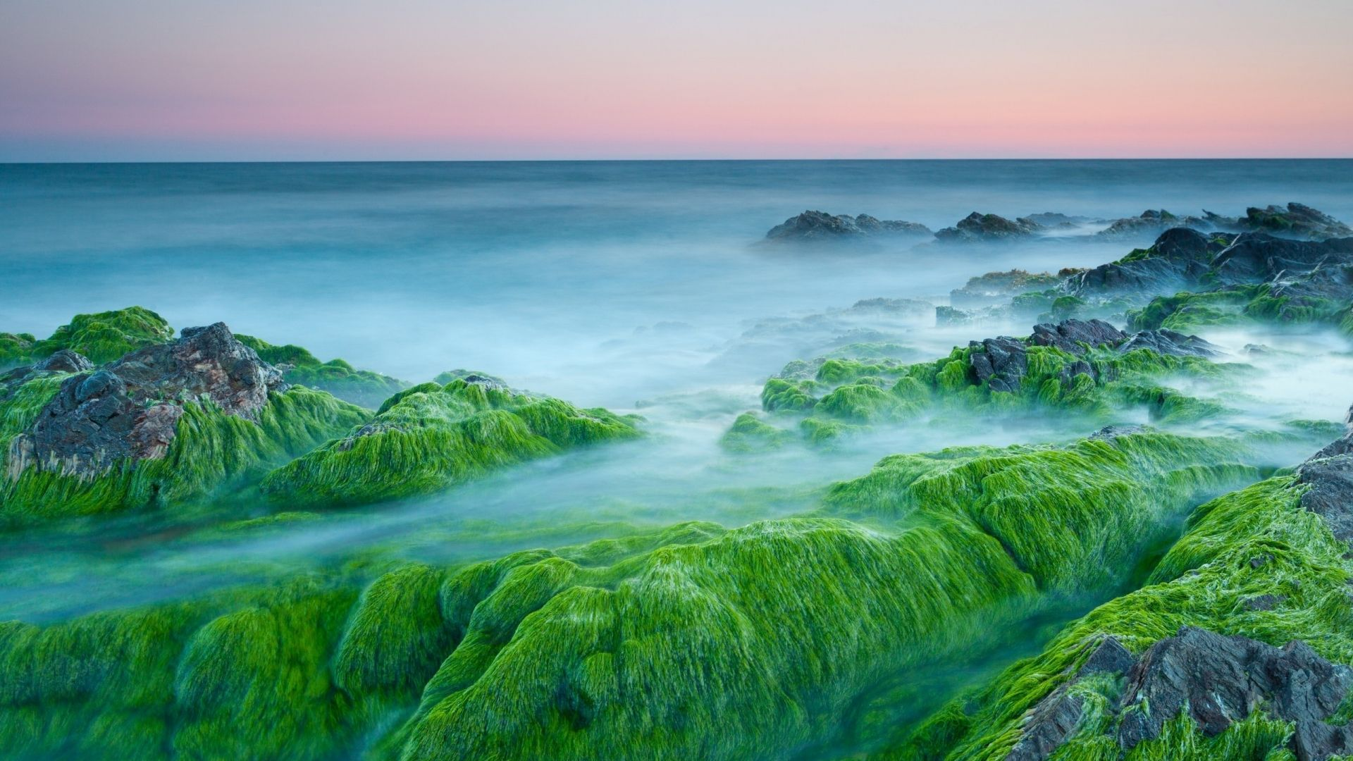 Green Algae On Rocks For 1920 X 1080 Hdtv 1080p Resolution New Nature Wallpaper Green Nature Wallpaper Night Scenery