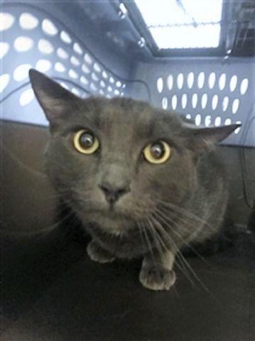 BUOY 30838 Cats, Animal rescue, Buoys