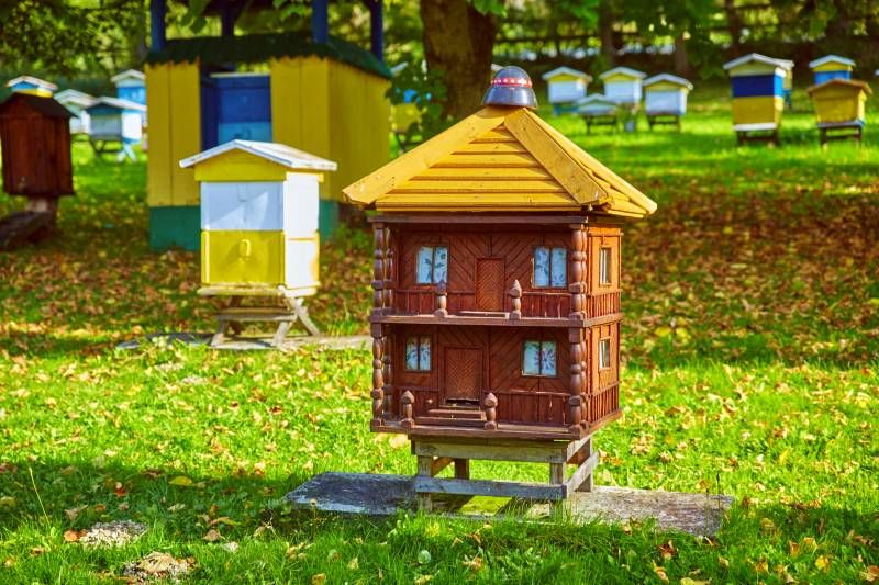 """figural beehives of the """"Barć"""" Apiary in Kamianna"""