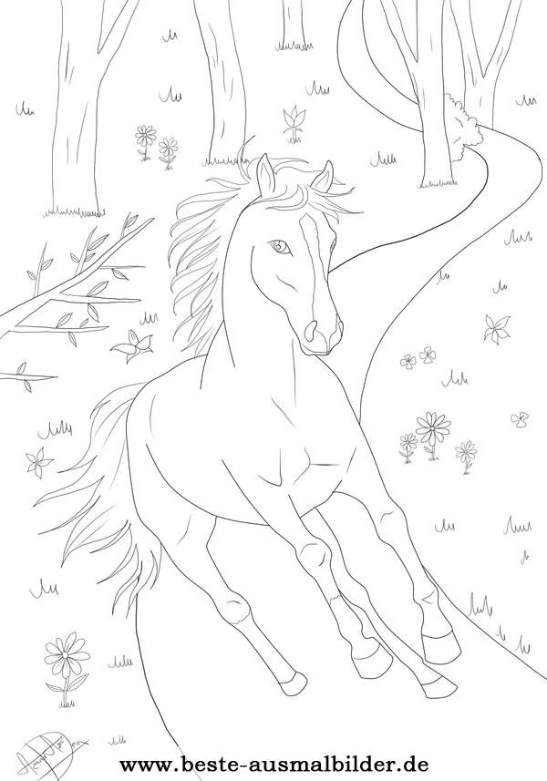 Ausmalbild Pferd Wald | Horse General Knowledge | Pinterest
