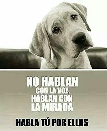 Sé Su Voz No Al Maltrato Animal Perros Animales Frases