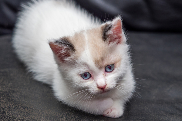 Is Your Cat Peeing on the Bed or Couch? Here's Why