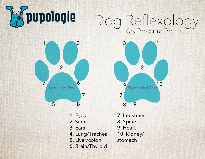 Dog Reflexology - Key Pressure Points