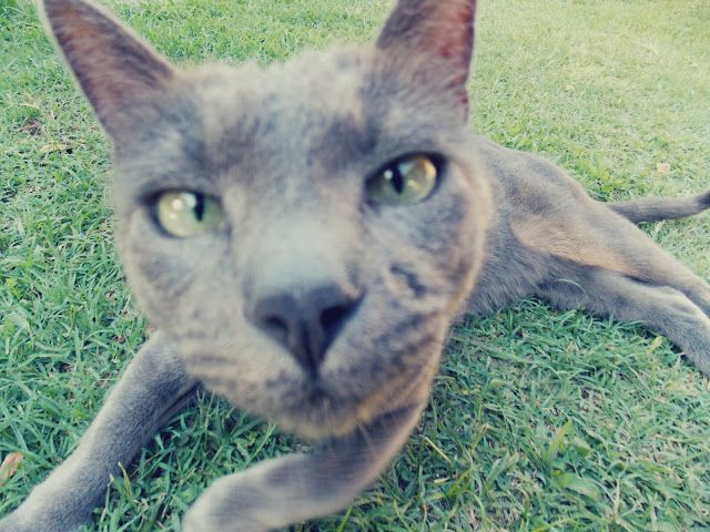 My adorable cat: Darcy - Gabriela Margall