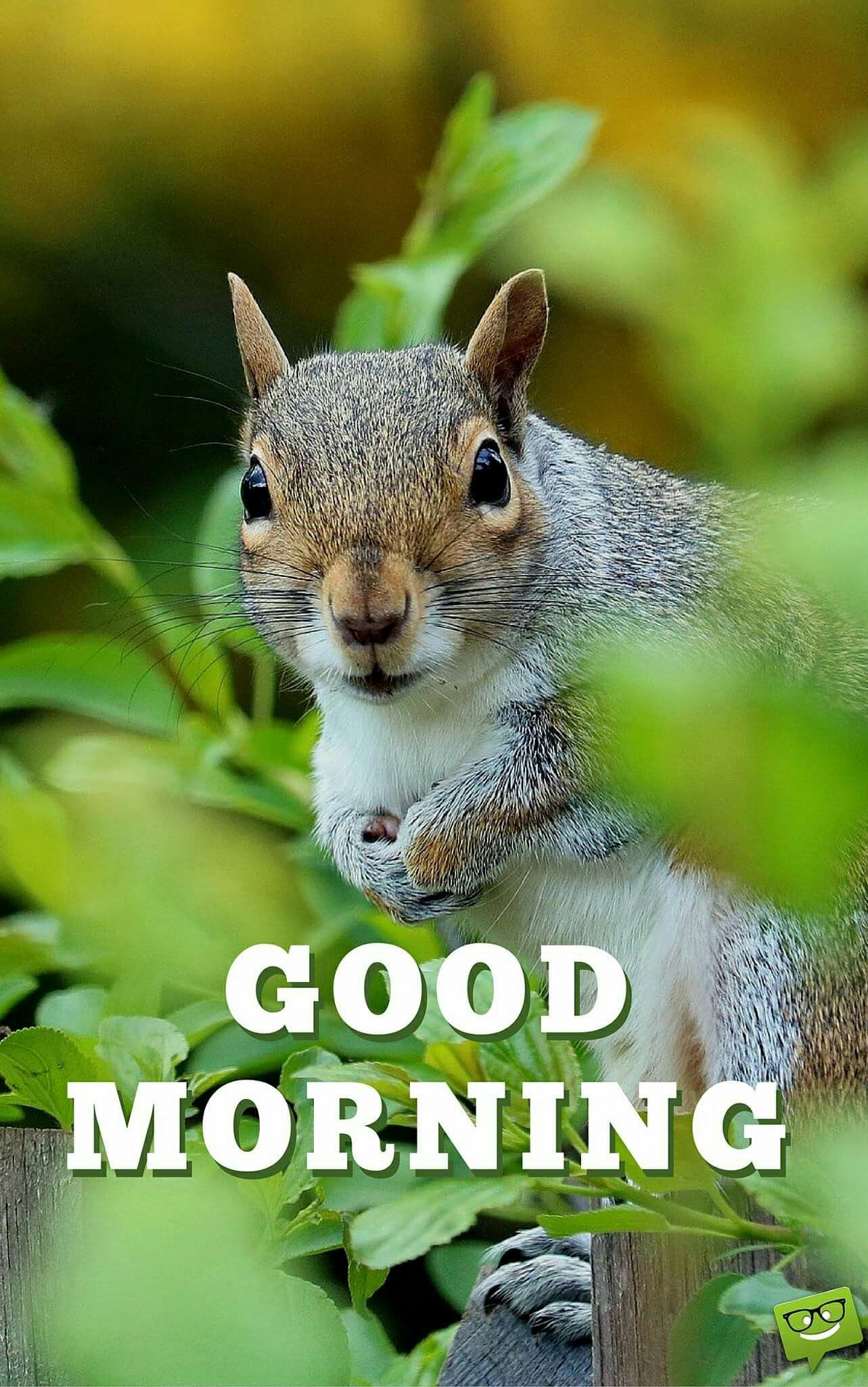 Надписью топовая, картинки с белочкой с добрым утром