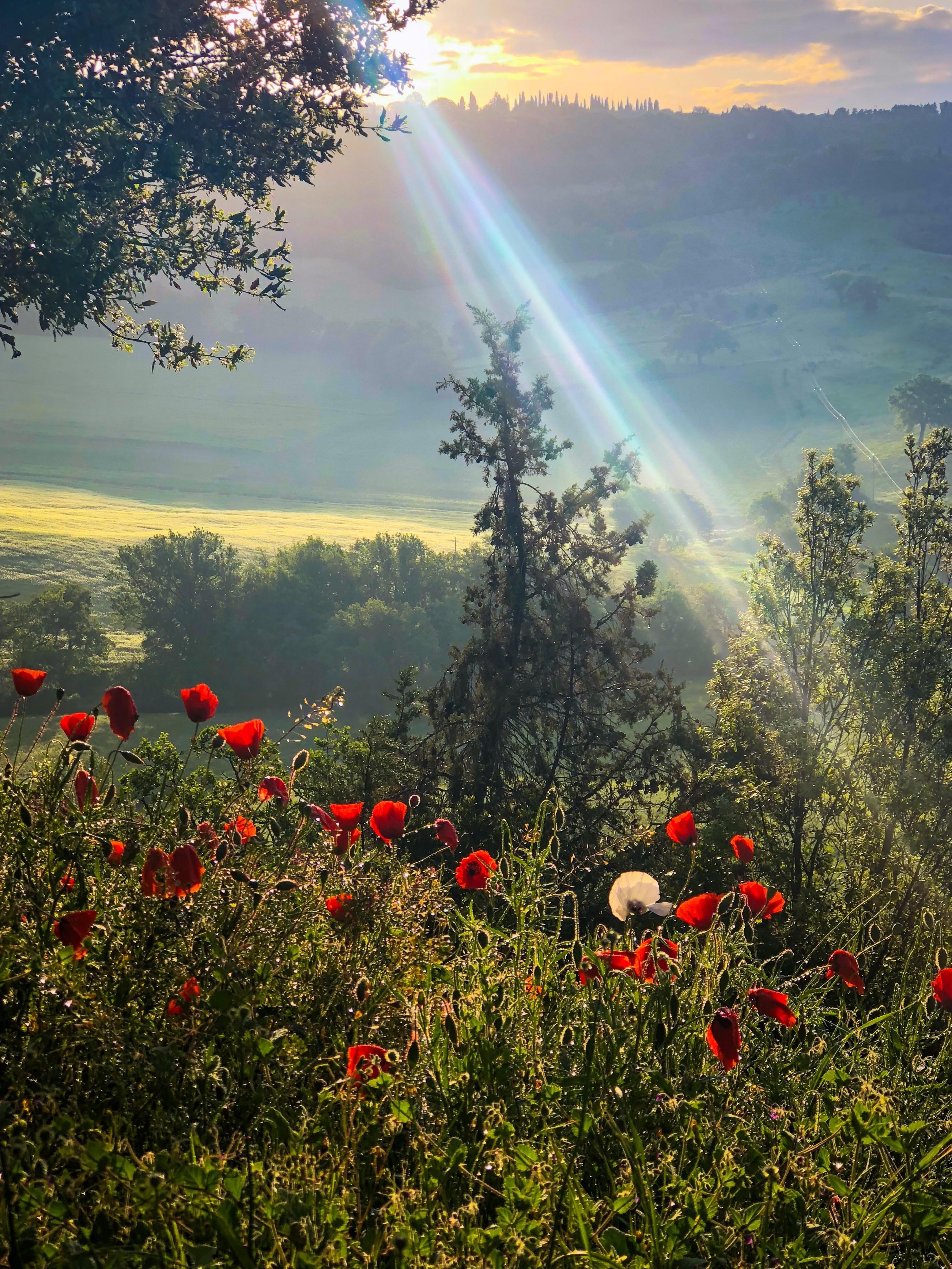 Картинки природы с солнцем
