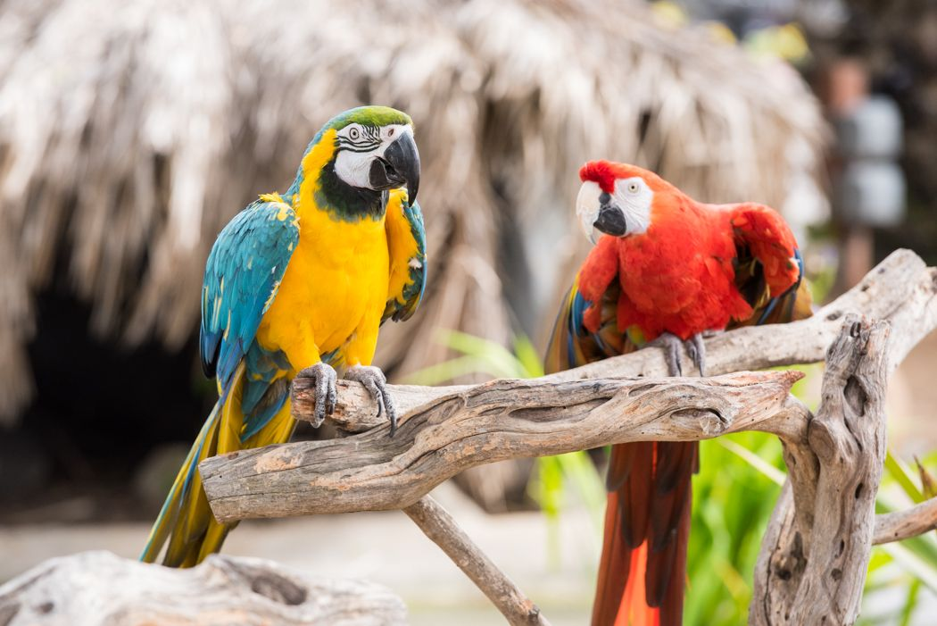free flight exotic bird