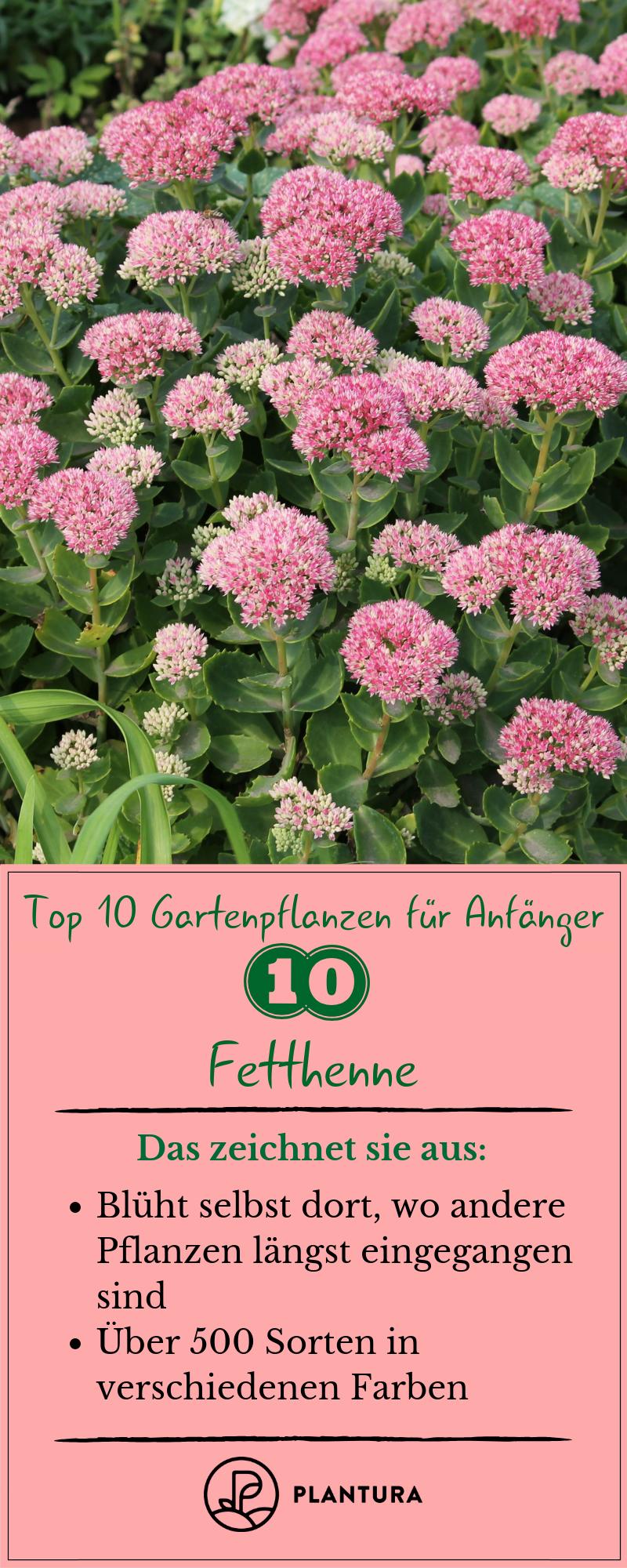 10 Gartenpflanzen für Anfänger - Plantura