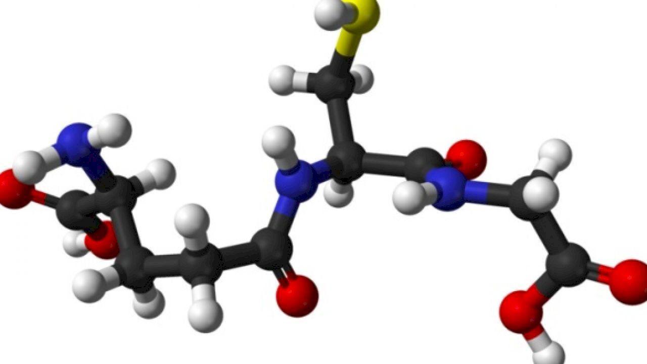 أين توجد الأحماض الامينية Amino Acids