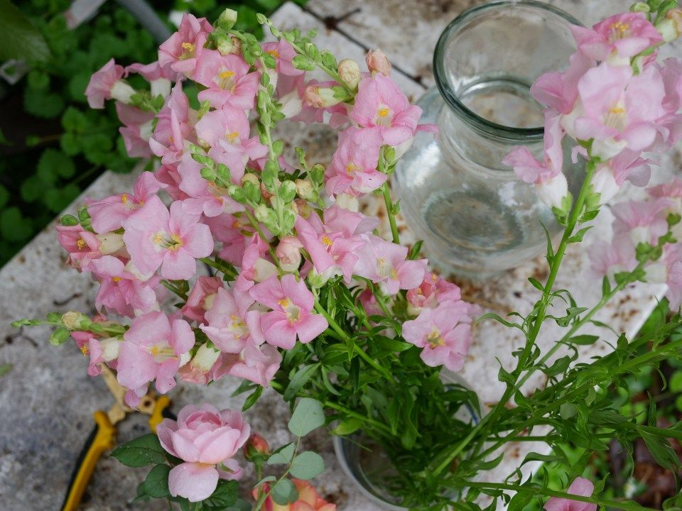 Snapdragon Sweet Pea And Bells Of Ireland Flower Arrangement Flower Arrangements Snapdragon Flowers Snapdragons