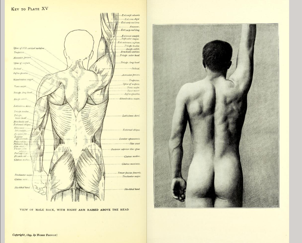 View of male back with right arm raised above the head. From: \