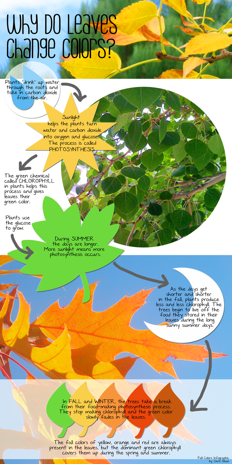 Why Do Leaves Change Colors in Fall? | Change colour, Infographic ...