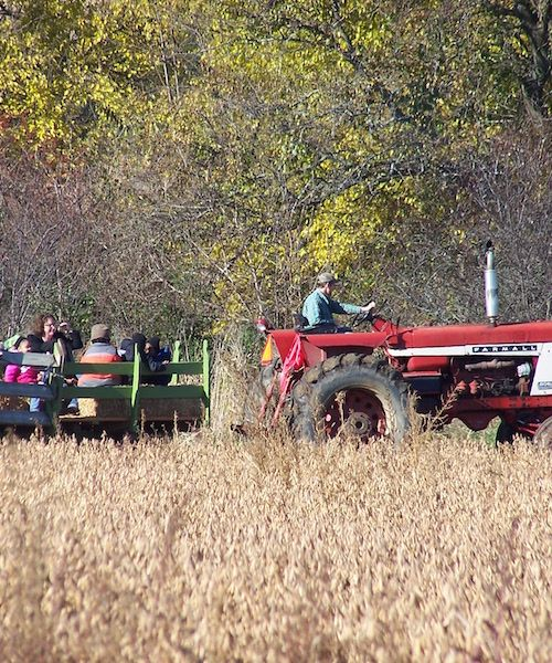Butterprint Farm Groups can take a hayride tour of the