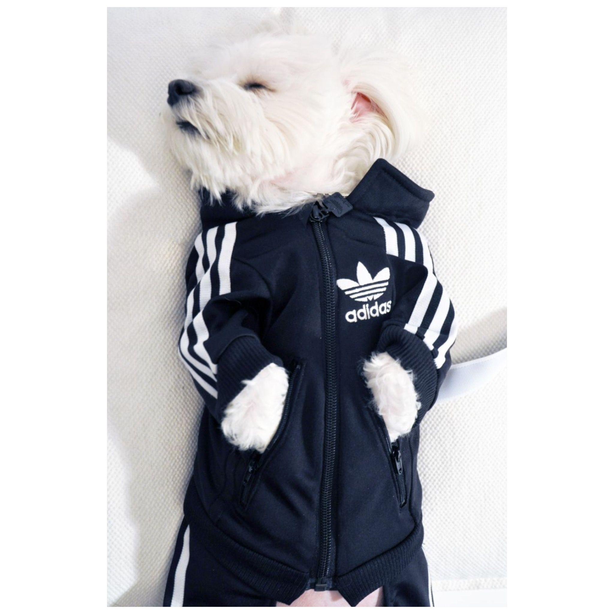 Pour March Survêtement Jogging Prêt Adidas Dog Le Chien qwEqTF