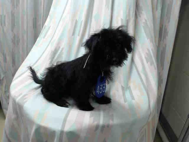 Curly Houston Texas Petharbor Com Animal Shelter Adopt A Pet