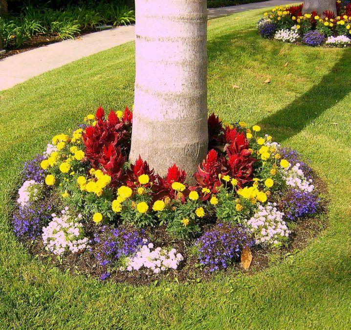 Canteros De Flores Alrededor De Árboles