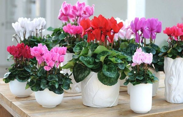 34 Poisonous Houseplants For Dogs And Cats Plants Inside Plants Winter Flowers