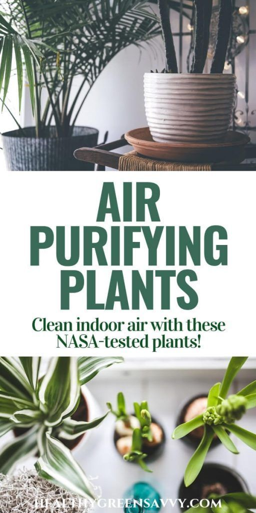 Best Plants for Cleaning Indoor Air | HealthyGreenSavvy