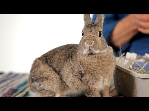 Are Rabbits Good Pets For Children Pet Rabbits Youtube Animals For Kids Best Pets For Kids Pet Rabbit