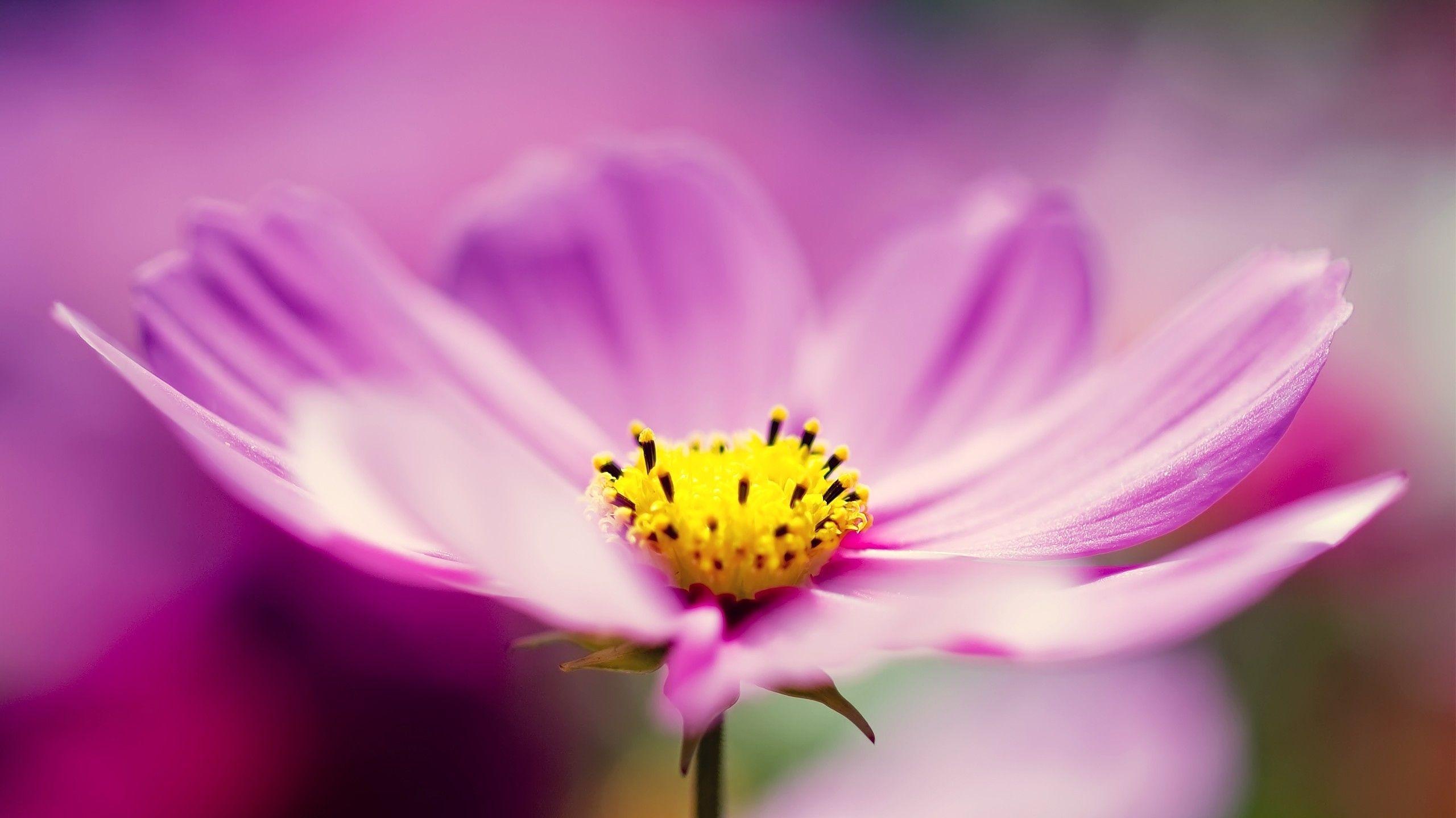 Pin by  Eva  Louve   on  Fleurs   Pinterest