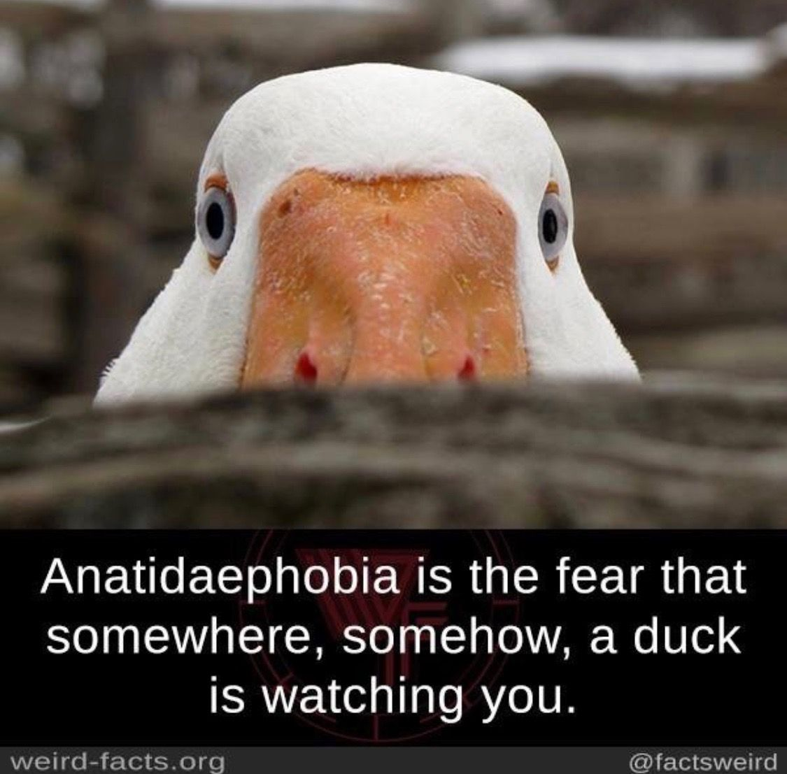 Pin By Mallard Mother On Birds Of A Feather Funny Animal Memes Wtf Fun Facts Funny