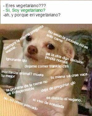 Vegetariano Memes Life Love Life
