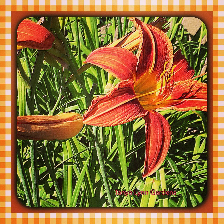 Tanya Lynn Photography  Garden Print $125.00
