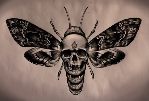 Looks Like The Moth From Silence Of The Lambs Ink Me Up Baby Motten Tattoo Insekten Tattoo Und Tattoo Toten Kopf