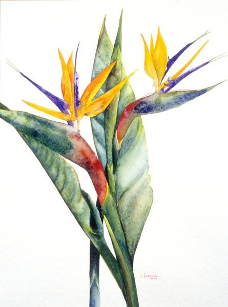 Birds Of Paradise Paradise Painting Birds Of Paradise Watercolor Bird