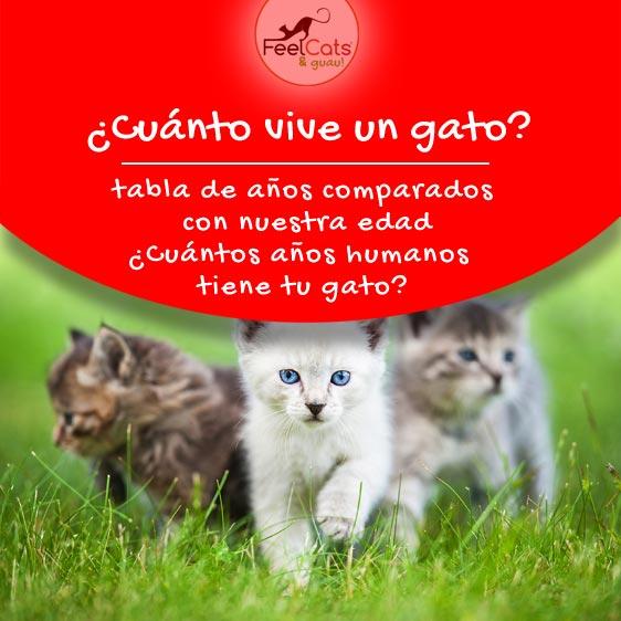 Cuánto Vive Un Gato Esperanza De Vida De Un Gato Feelcats Gatos árbol Para Gato Gato Domestico