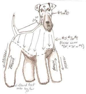 Corte de pelo a fox terrier