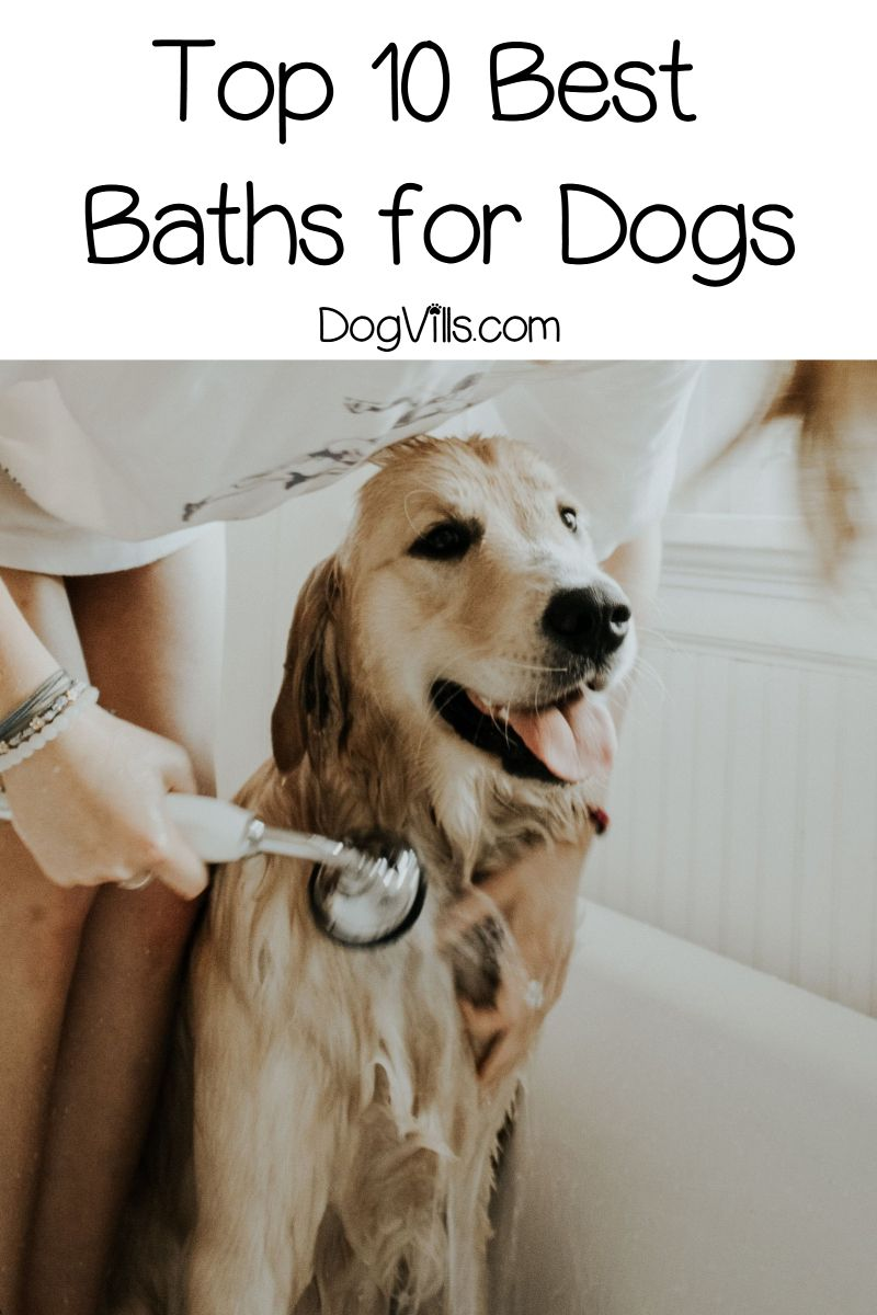 Top 10 Best Baths For Dogs With Reviews Cute Dog Collars Dogs