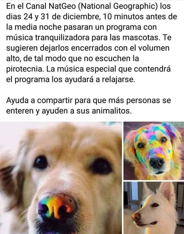 Pin De Analia Villalba En Animalitos Tiernos En 2020 Perros Y Cachorros Lindos Cuidar Animales Memes De Animales Tiernos