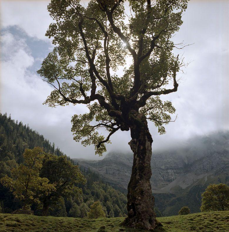Grosser Ahornboden Nature Preserve At The Heart Of Karwendel