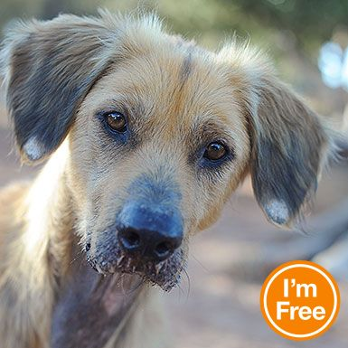 Adopt from Our Sanctuary | Afghan hound, Animal society and