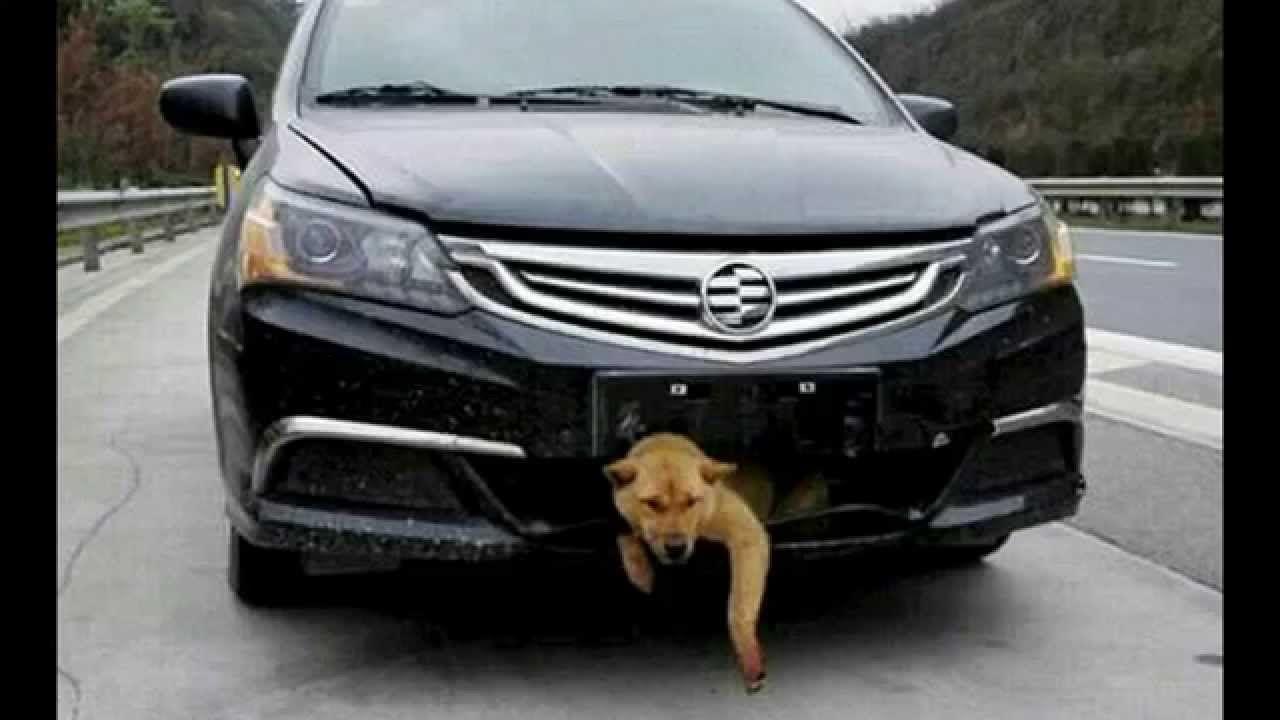 Dog Survives Car Accident