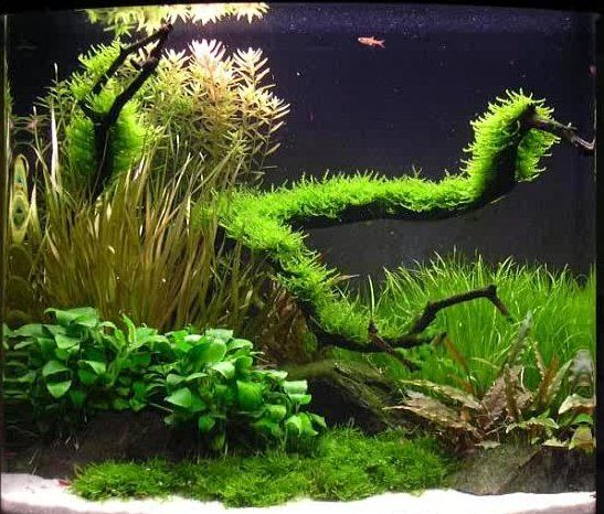 Aquascaping With River Rocks   Google Search