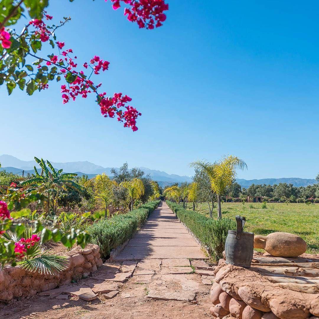 """In Marrakesch haben wir dieses Paradies & die Schweizerin Christine Ferrari welche das """"Paradis du Safran"""" aufgebaut hat besucht. Ein traumhaft schöner Ort einer beeindruckenden Frau! Alles dazu erfahrt ihr jetzt im neusten Blogpost. (Link in der Bio oder LittleCITY.ch)   #flyedelweiss @flyedelweiss #paradisdusafran #marrakesh #marrakesch #christineferrari #littlecityinmarokko"""