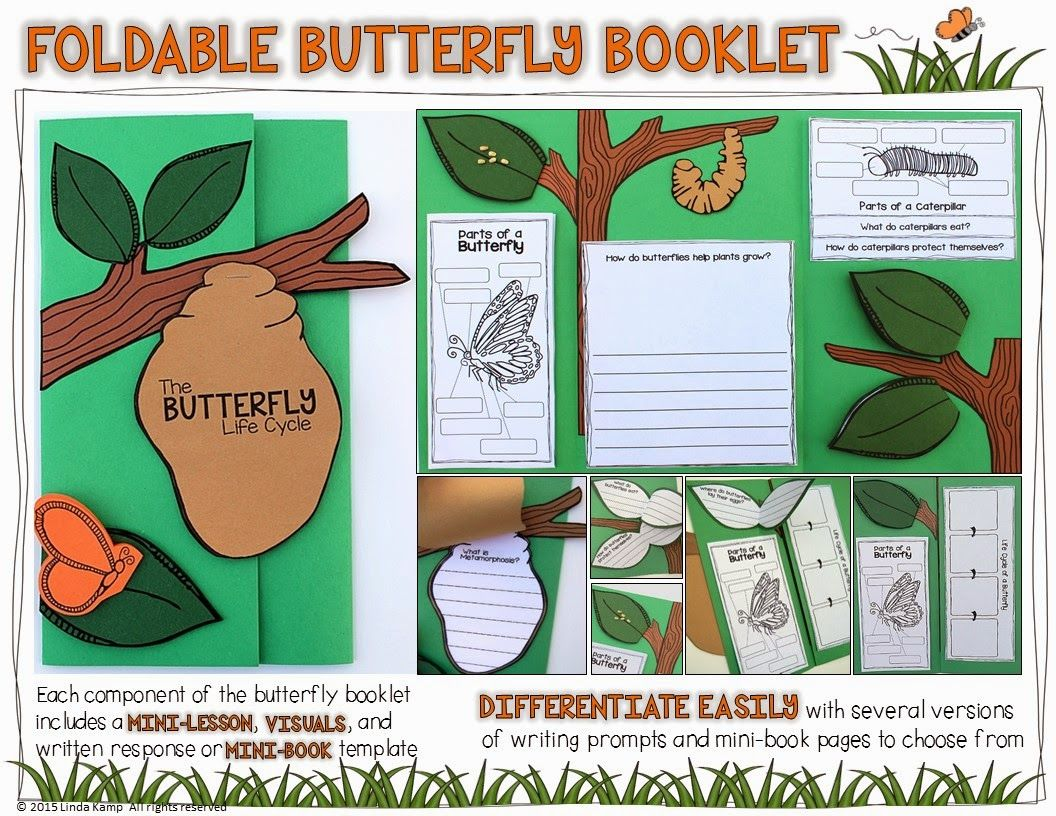 Butterfly Life Cycle Resources Amp Free Printables Homeschool