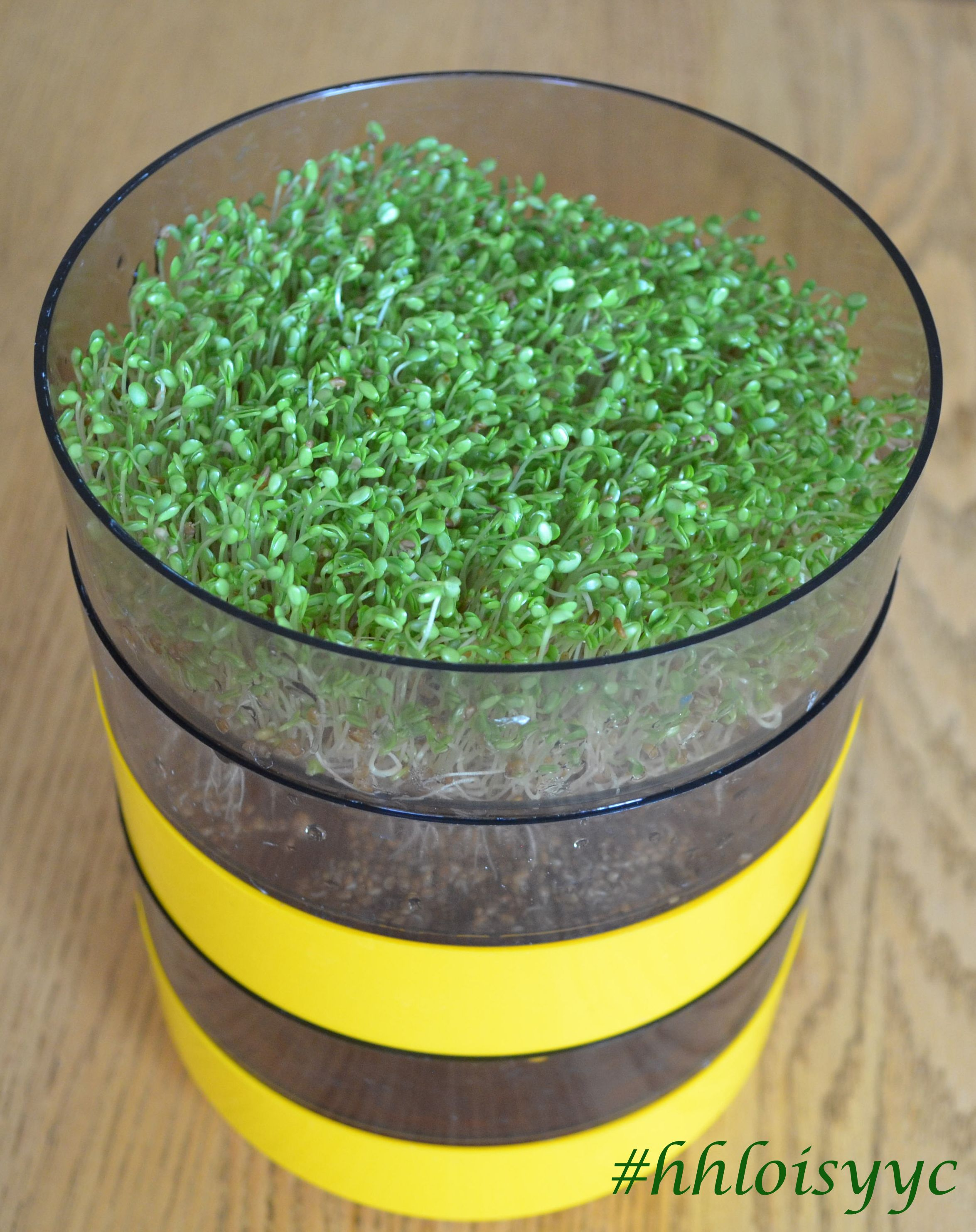 SPROUTS are LIVE FOOD! read about the benefits of sprouts
