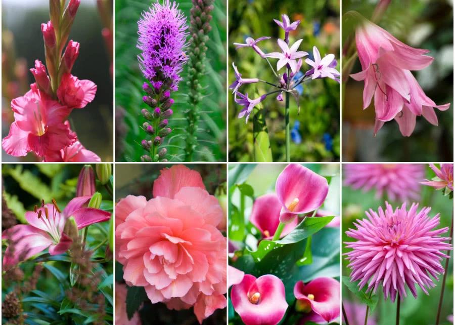8 Najpopularniejszych Rozowych Kwiatow Do Ogrodu Zielony Ogrodek Plants Garden
